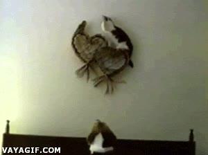 Enlace a ¡Aunque te subas ahí arriba no escaparás de mi garra, ave estúpida!