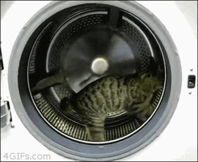 Enlace a ¿Que tu gato no hace ejercicio? Enséñale cómo funciona la lavadora y listo