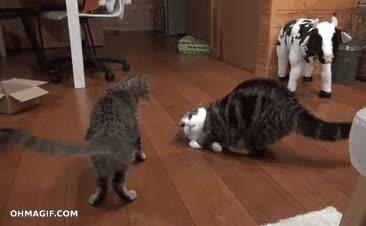 Enlace a ¿Quieres pelear? ¡Venga, aquí te espero!