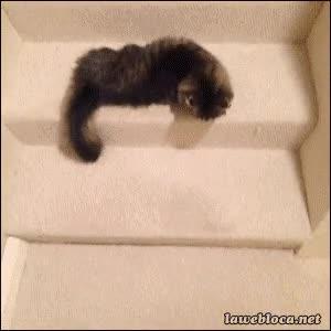 Enlace a A ver gatito, ¿qué has estado bebiendo hoy?