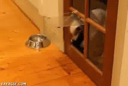 Enlace a No sé qué tendrá esta puerta que parece que confunde a este perro