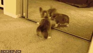 Enlace a Este perro se vuelve loco con su reflejo en el espejo