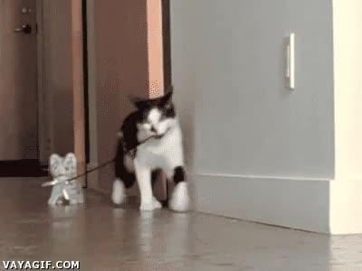 Enlace a ¡Vamos hermano, hay que huir de los humanos!