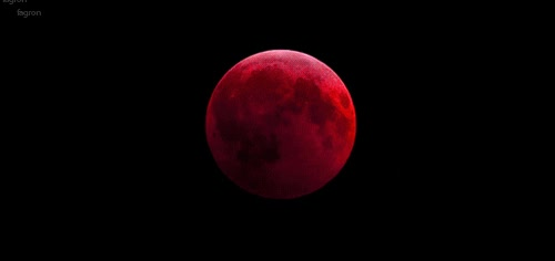 Enlace a Así se pudo ver la primera de las cuatro lunas de sangre