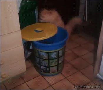 Enlace a ¿Pero a dónde iba el gato para caerse de esta forma tan tonta?