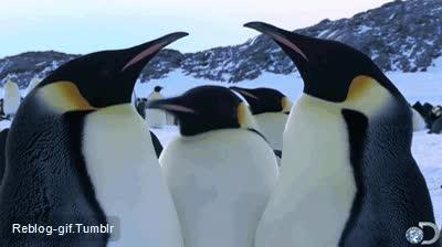 Enlace a Las discusiones de pingüinos son difíciles de seguir
