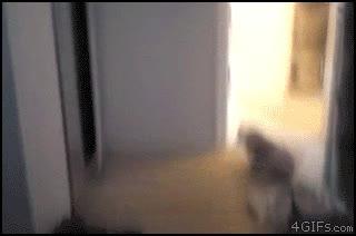 Enlace a Se lleva bastante mal con el gato del otro lado del espejo