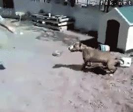 Enlace a Muy valiente eres con el perro atado, pero qué pasaría si...