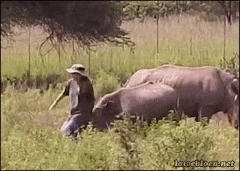 Enlace a El riesgo más terrible que tiene estar cerca de rinocerontes