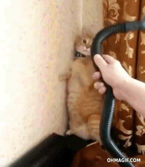 Enlace a La peor pesadilla de un gato