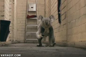 Enlace a ¿Has visto correr alguna vez a un koala? Sí, yo también creo que es bastante extraño