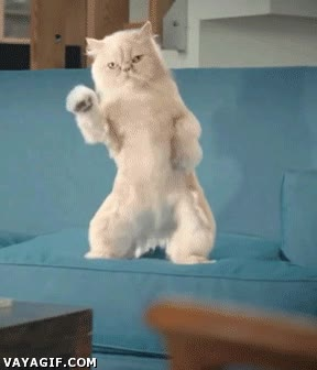 Enlace a Cuando tu gato se queda solo en casa...