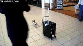 Enlace a ¡Rápido, que pierdo el avión!