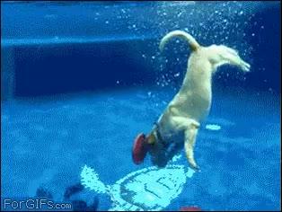 Enlace a Así se las ingenia un perro para sacar dos frisbees de una piscina