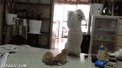 Enlace a Hay algunas cosas que no entiendo de los gatos, creo que ellos tampoco