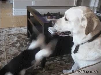 Enlace a No lo soporto más, ¡besémonos, tonto!