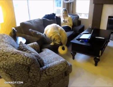 Enlace a ¡Ayuda, he olvidado cómo bajarme del sofá!