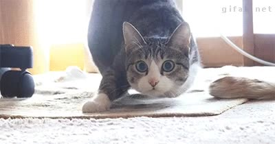 Enlace a ¿Soy yo o parece que este gato esté flotando?