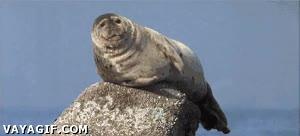 Enlace a El hipo hace muchas veces gracia, pero una foca con hipo ya es demasiado