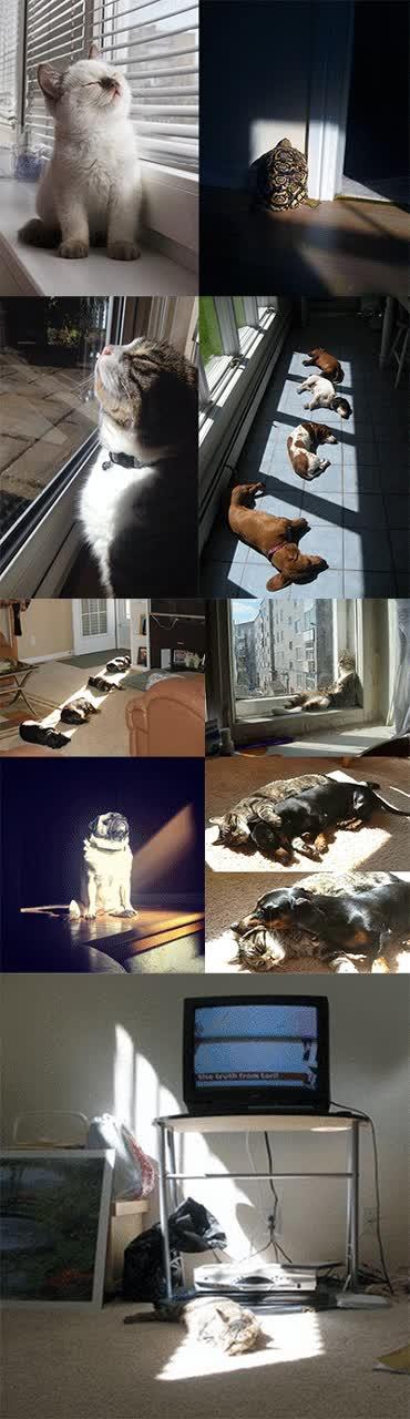 Enlace a A todos los animales les gusta el sol, pero sin duda, los reyes son los gatos