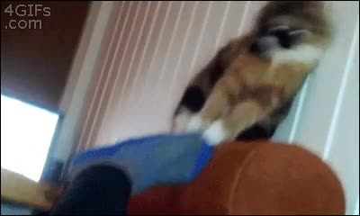 Enlace a El gato que se volvía loco cuando tocaba un calcetín