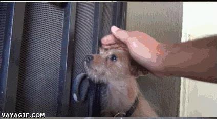Enlace a Regalando una mejor vida a un perro abandonado