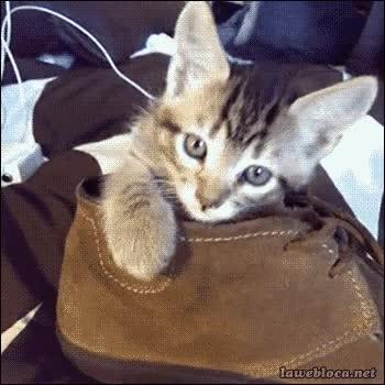 Zapatos El gato con botas bZWG05au