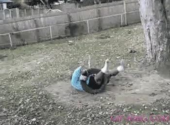 Enlace a ¿En serio pensabas que iba a aguantar la cuerda?