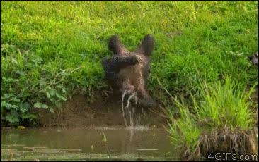 Enlace a Para los que no se creen que venimos del mono, ¿no veis que somos igual de tontos?