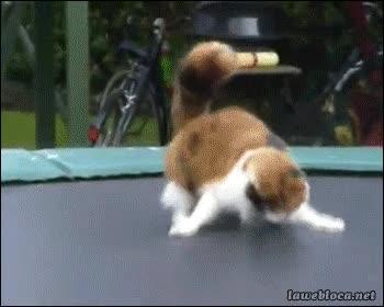 Enlace a La locura que provoca una cama elástica en un gato