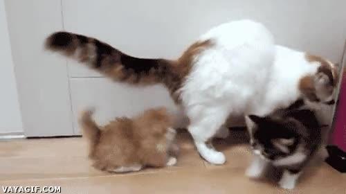 Enlace a Los cachorros de gato pueden llegar a ser tan asustadizos...