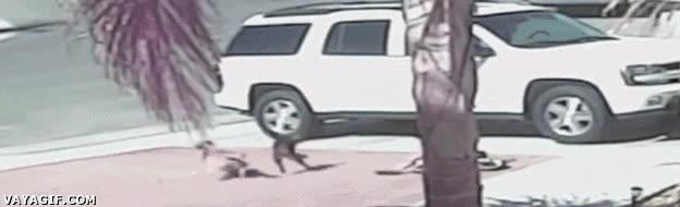 Enlace a Un gato defendiendo a este niño del ataque de un perro