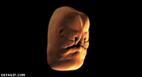 Enlace a Así se forma un rostro humano en el seno materno