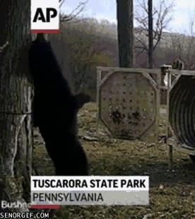Enlace a Cuando a los osos les pica la espalda saben cómo aliviarse