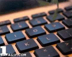 Enlace a Nunca dejes a una mantis cerca del teclado de tu ordenador