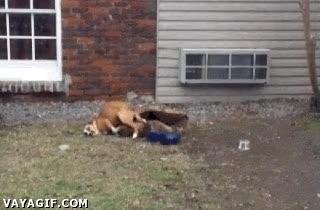 Enlace a Esto es lo que pasa cuando cruzas un perro con un martillo neumático