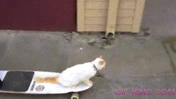 Enlace a Skatercat
