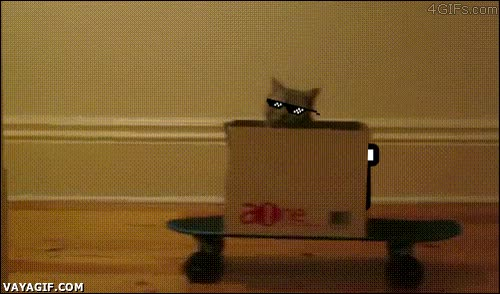Enlace a Ya te gustaría molar tanto como este gato