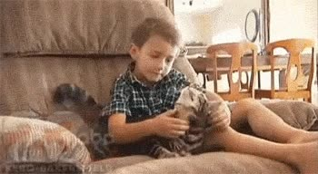 Enlace a ¿Te acuerdas del gato que salva al niño de un perro? Aquí el porqué lo quiere tanto