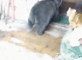 Enlace a Aww, ¡te quiero oso!
