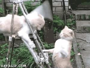 Enlace a No debí enseñarle kung-fu al gato...