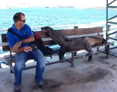 Enlace a ¡Este banco es exclusivo para focas, búscate el tuyo, humano!