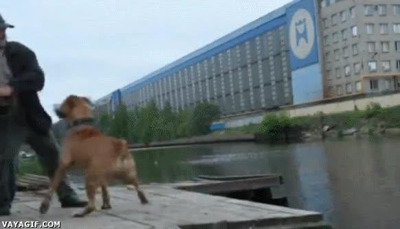 Enlace a Si quieres trollear a un perro, al menos suelta la correa