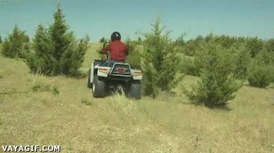 Enlace a Arrancar arbustos nunca fue tan divertido