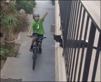 Enlace a ¡Choca esos cinco, amigo felino!
