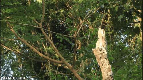 Enlace a ¿Soy yo o ese tronco se ha ido volando?