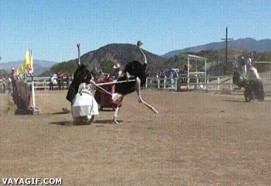 Enlace a Y por eso es tan difícil hacer una carrera de avestruces