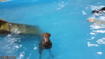 Enlace a ¡Eh tíos, no os vayáis, que era broma, no me he meado en el agua!