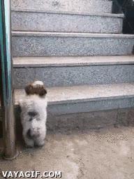 Enlace a He visto que suben por aquí, ¿pero cómo lo hacen?