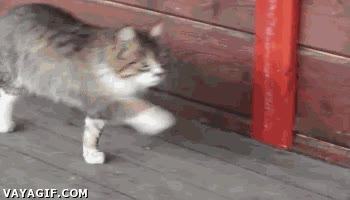 Enlace a Curiosa manera de caminar la de este gato